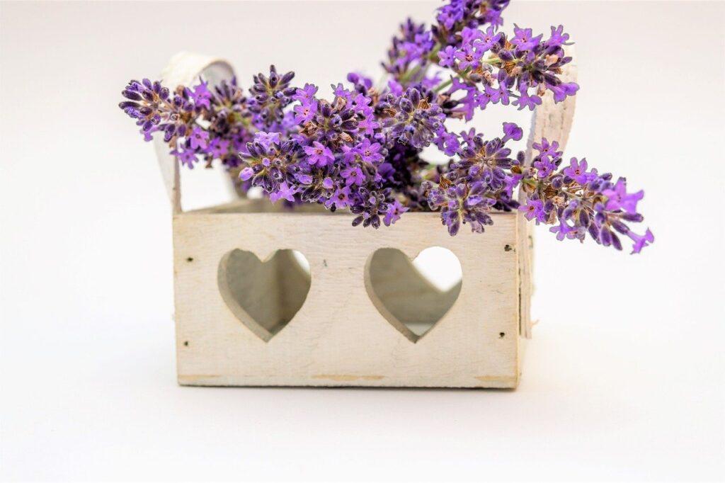 Lavendel - vielseitger Nutzen und Genuss